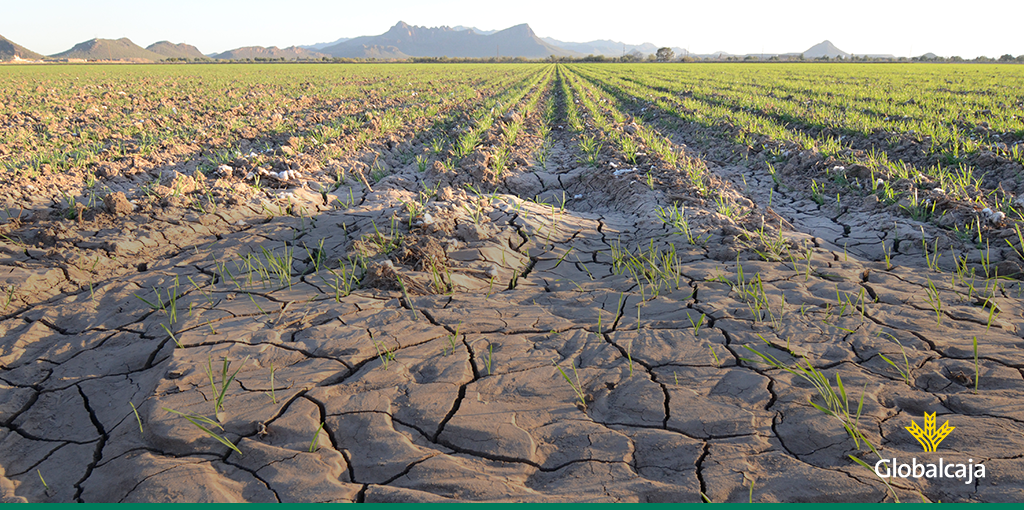 Los efectos del cambio climático en agricultura