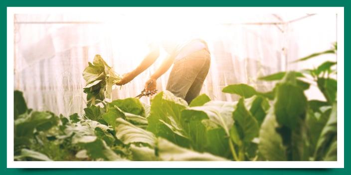 Agricultura ecológica: tendencias del mercado y crecimiento.