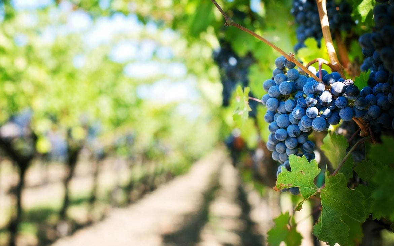 Castilla - La Mancha Tierra de Vinos