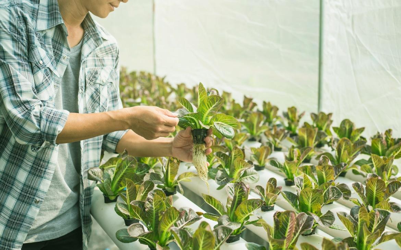 Todo lo que debes saber sobre los Cultivos Hidropónicos