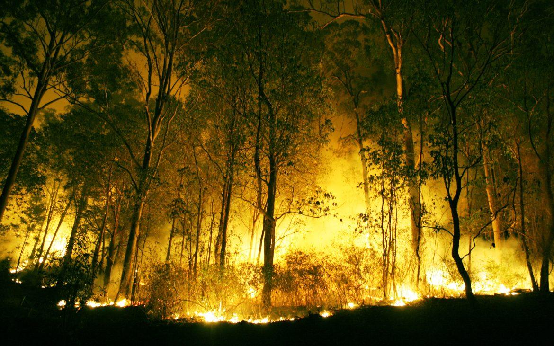 La prevención, clave para evitar los incendios forestales