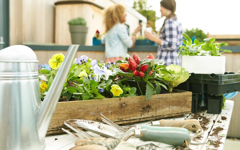 Huerto urbano: calendario de siembra, cosecha y mejores combinaciones
