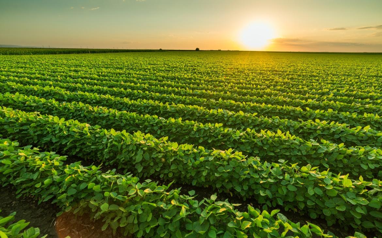 Agricultura de precisión para gestionar y maximizar cultivos