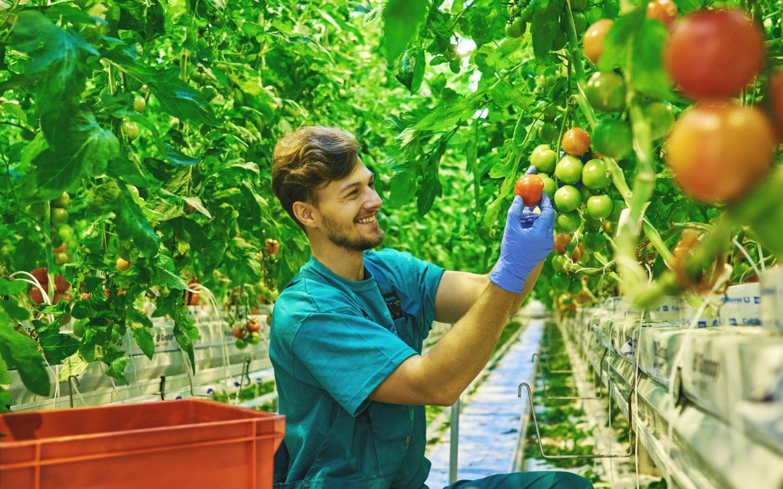 El cooperativismo agroalimentario en Castilla-La Mancha