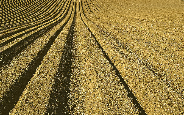 El cultivo de la camelina, una alternativa al cereal