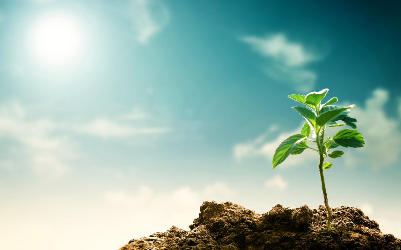 Cómo afectará el cambio climático a la agricultura