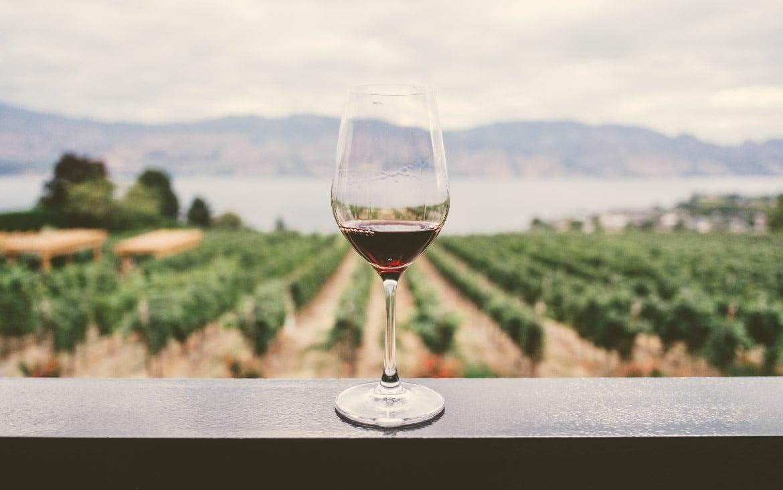 Enoturismo en Castilla-La Mancha: ruta del vino