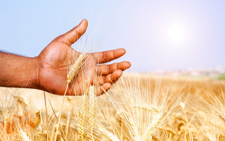 Por qué se celebra el Día Mundial de la Alimentación