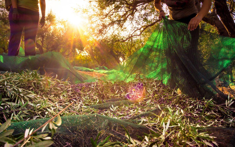 Seguros agrarios: Asegura tu cosecha con Globalcaja