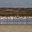 Ruta por los humedales de Castilla-La Mancha, ¿te mojas con nosotros?