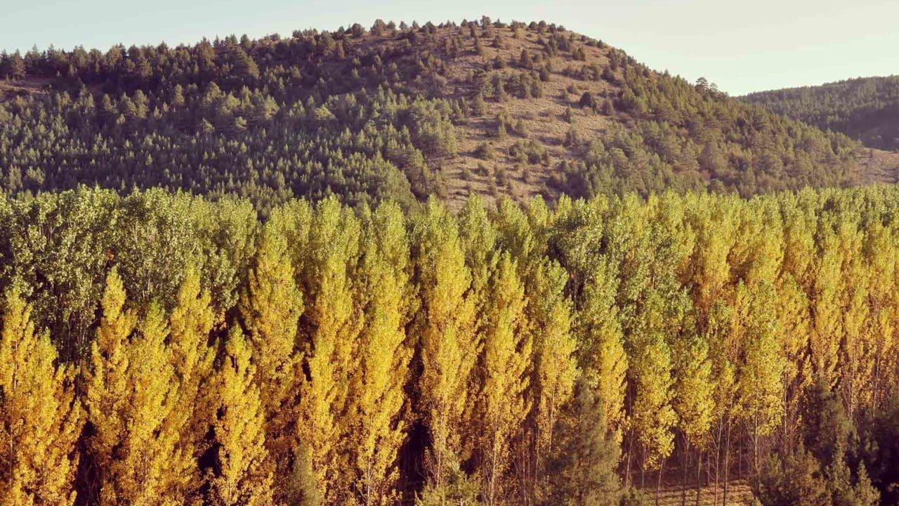https://blog.globalcaja.es/wp-content/uploads/2021/01/Urban-Forest-1280x720.jpg