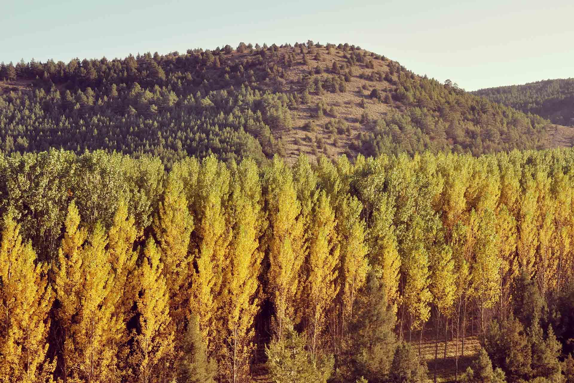 """Globalcaja colabora con """"Urban Forest Innovation Lab"""", el programa para impulsar la bioeconomía forestal en Cuenca"""