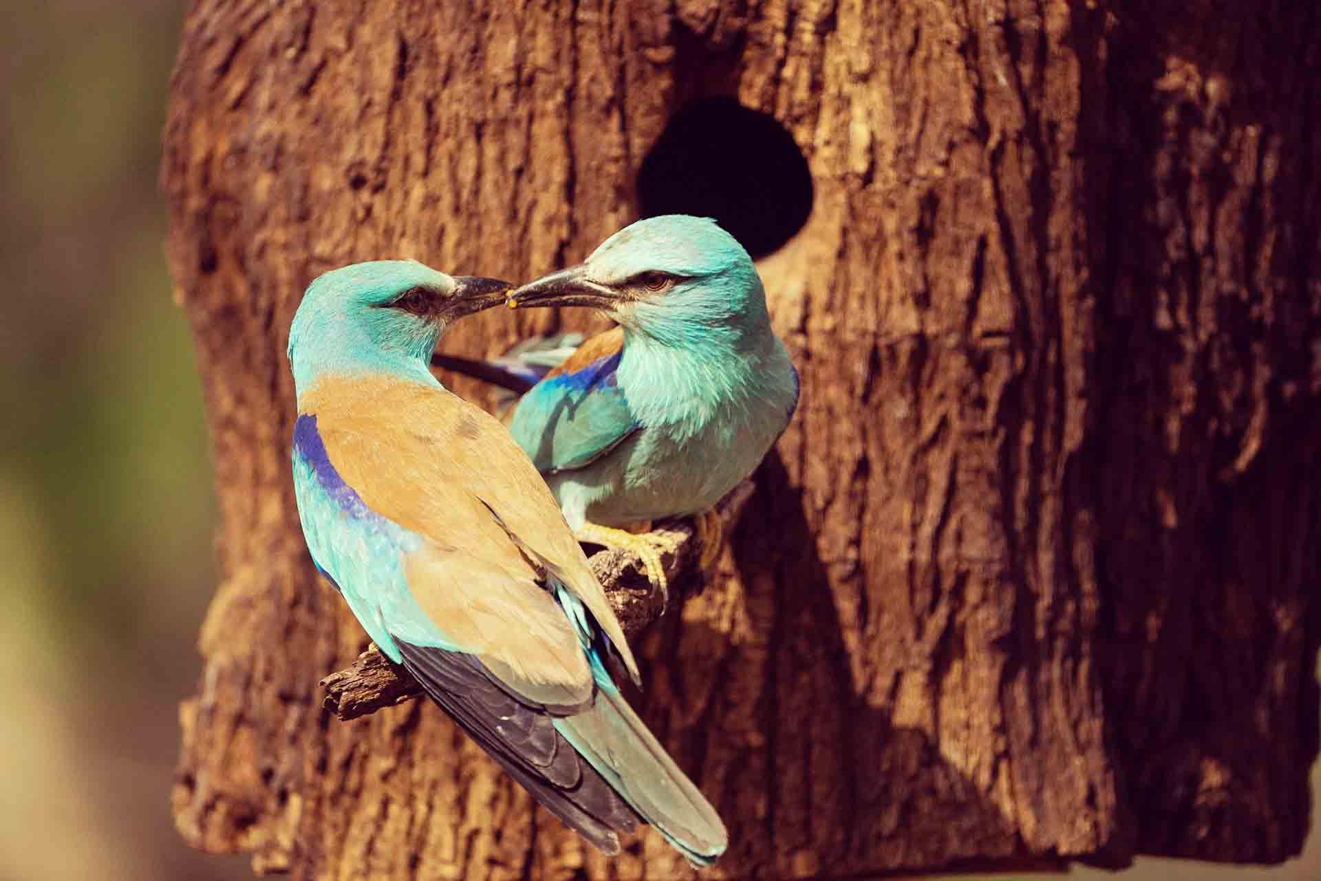 Estos son los proyectos LIFE que cuidan de la biodiversidad en nuestra tierra
